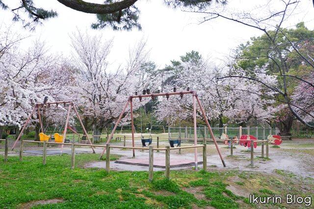 京都御苑 枝垂れ桜公園写真画像 イクリンブログ