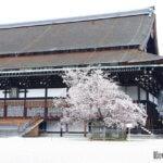京都御苑 紫宸殿・左近桜写真画像 イクリンブログ