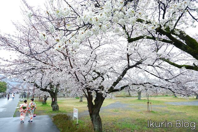 京都嵐山「サクラと着物女子」イクリンブログ