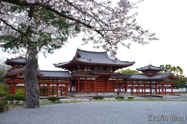 京都・宇治「平等院とサクラ」イクリンブログ