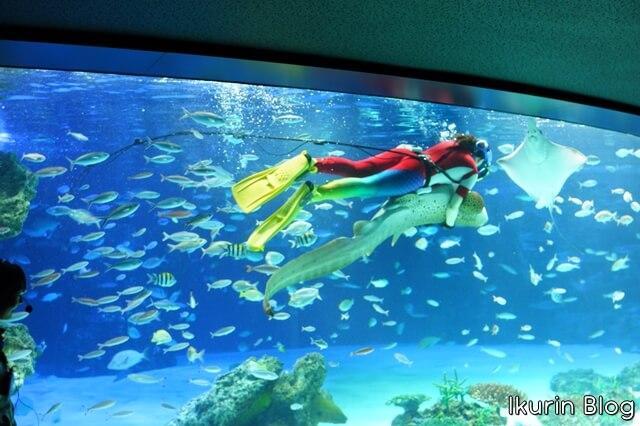 東京「池袋サンシャイン水族館のサメ」イクリンブログ