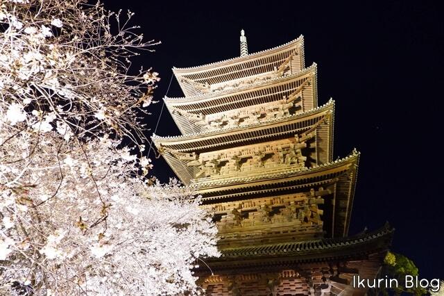 京都・東寺「夜桜と五重塔」イクリンブログ