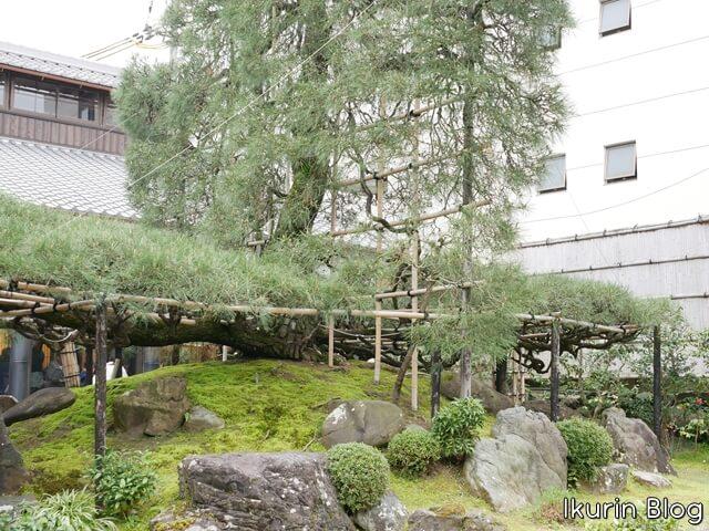 京都・宇治・中村藤吉本店「庭園の様子」イクリンブログ