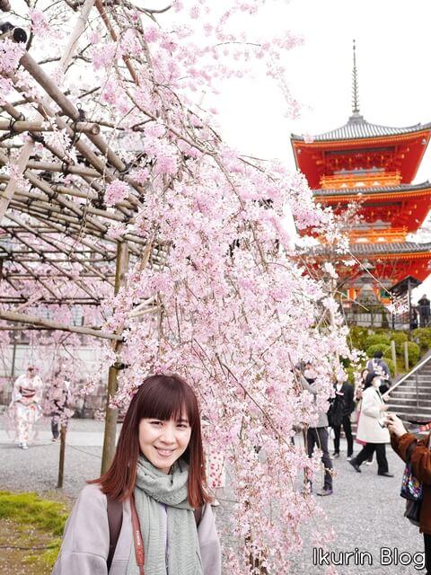 京都・清水寺「サクラとイクリンの写真」イクリンブログ