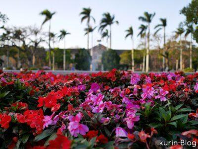 台湾・台北「台湾大学・花と文学院」イクリンブログ